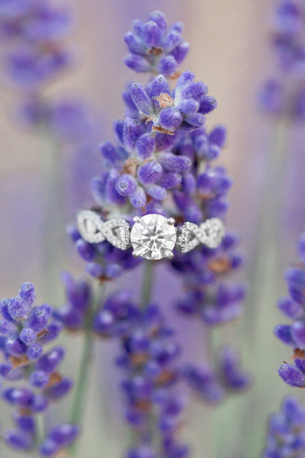 bywater-hollow-lavendar-farm-engagement-photography (150 of 155).jpg