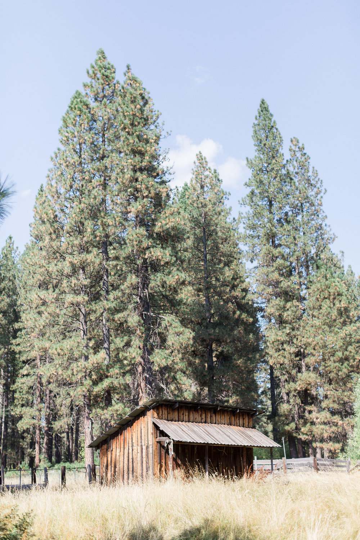 McCloud-California-Wedding-Photos (113 of 303).jpg