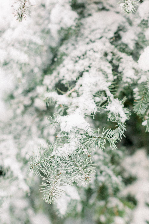 129Butte-Meadows-Christmas-Tree-Adventure (7 of).jpg