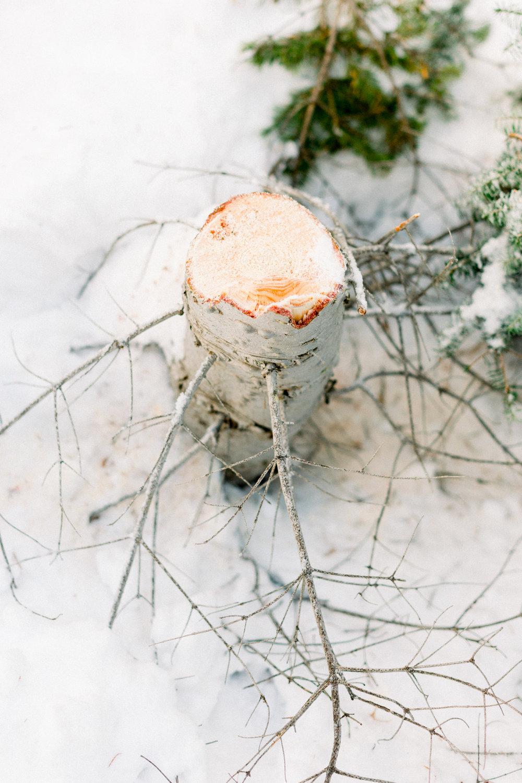129Butte-Meadows-Christmas-Tree-Adventure (36 of).jpg
