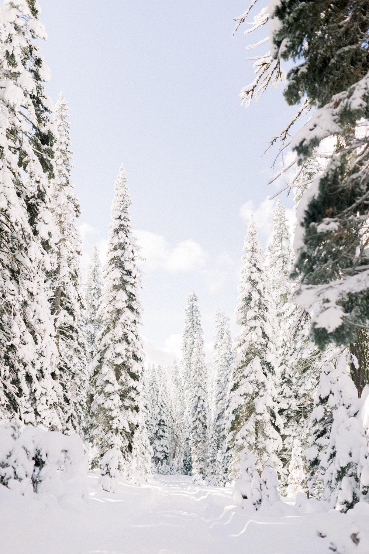 129Butte-Meadows-Christmas-Tree-Adventure (92 of).jpg