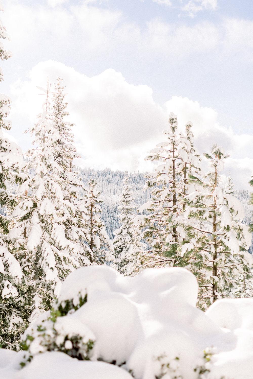 129Butte-Meadows-Christmas-Tree-Adventure (123 of).jpg