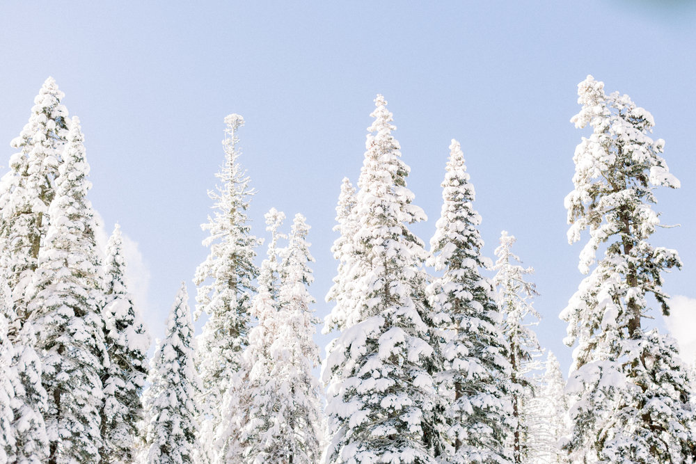 129Butte-Meadows-Christmas-Tree-Adventure (111 of).jpg