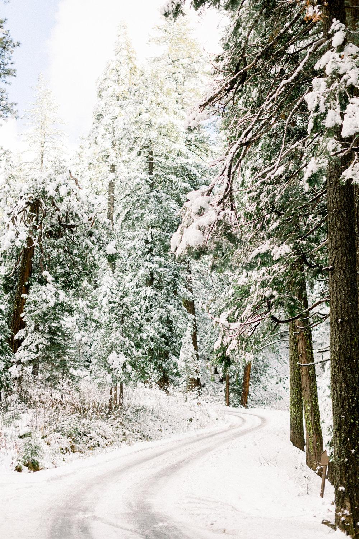 129Butte-Meadows-Christmas-Tree-Adventure (126 of).jpg