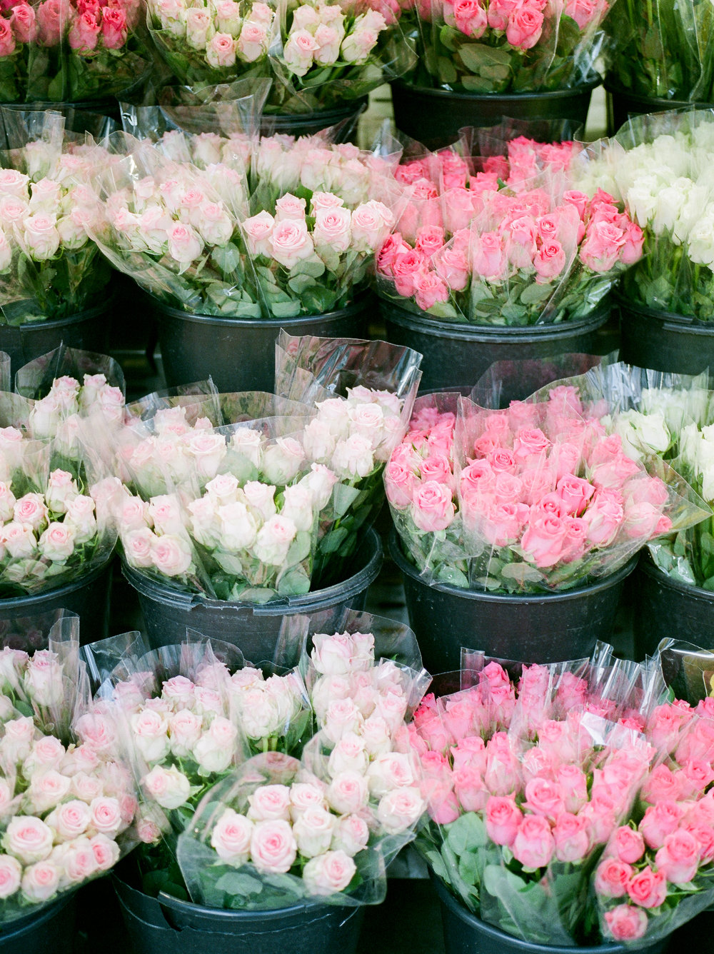 fresh-roses-in-paris-market.jpg
