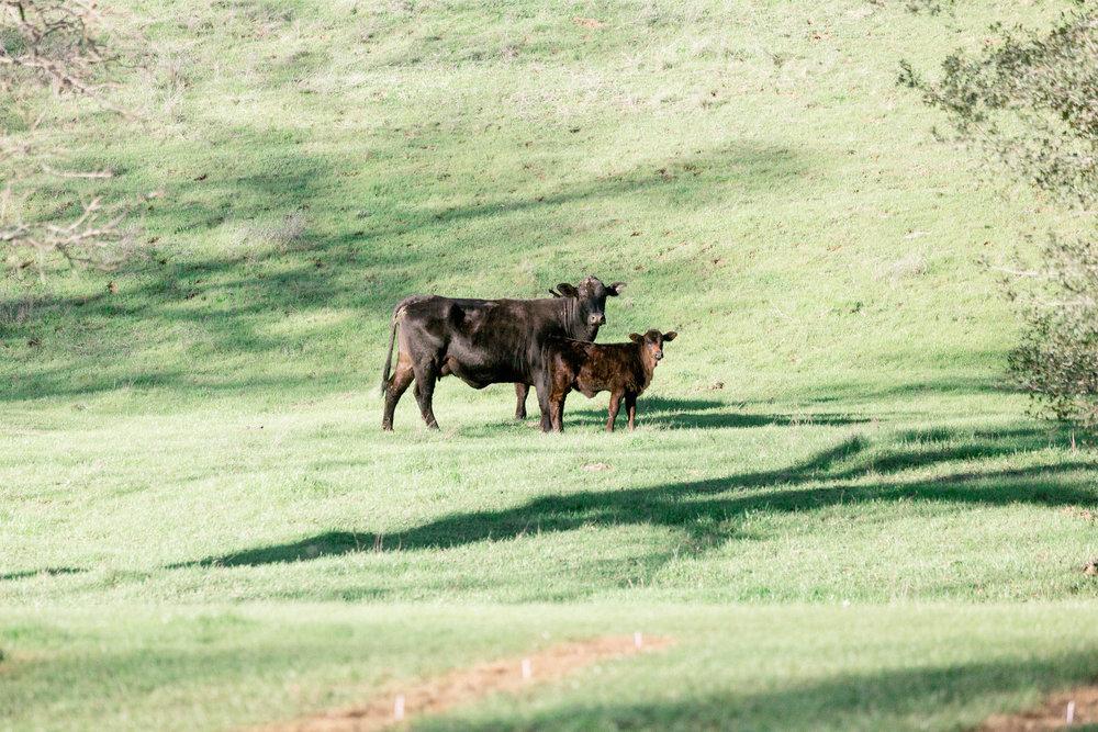 Napa-Ranch-Engagement-Photographer jpg