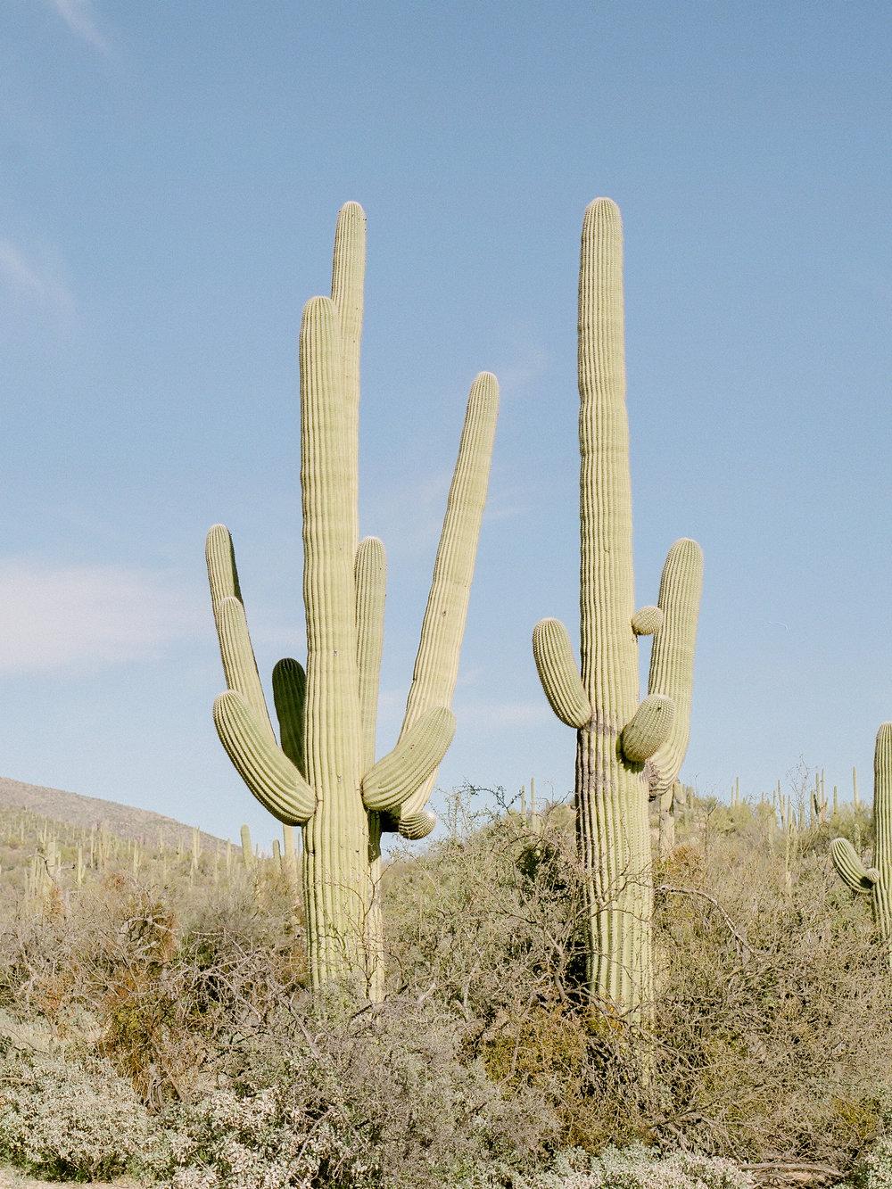 destination-arizona-photographer.jpg