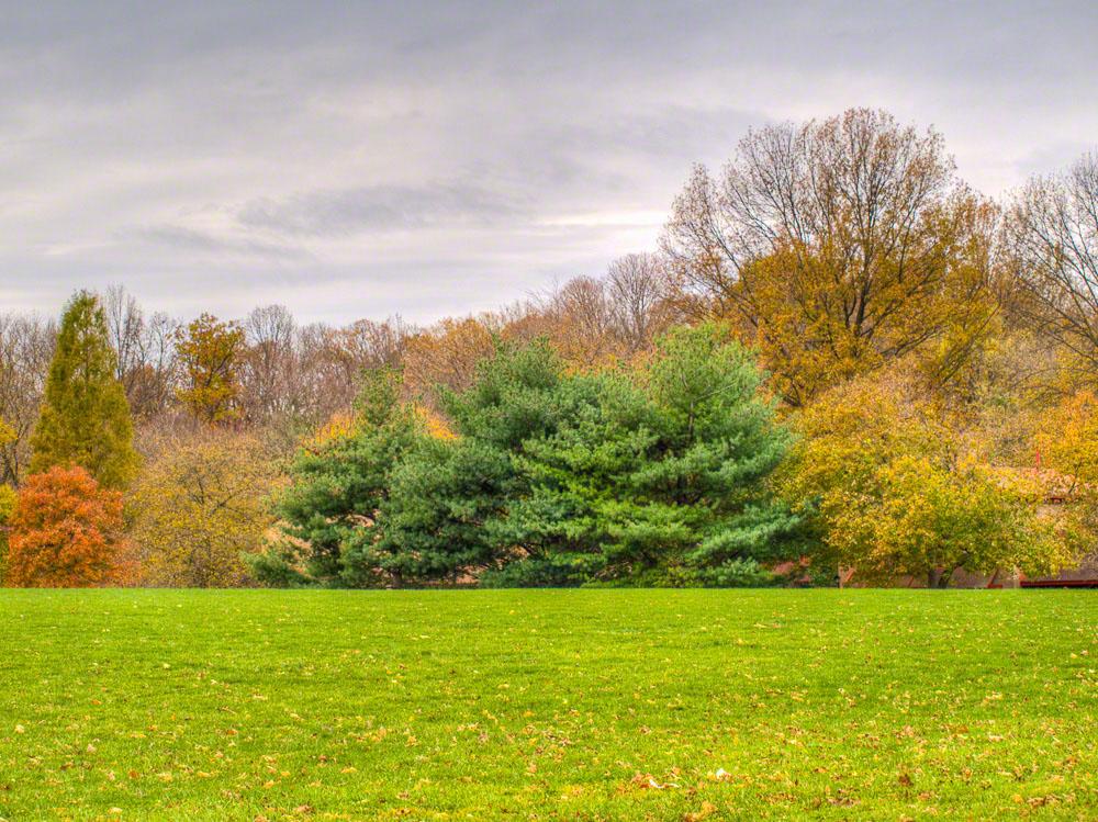 © Autumn Field_A074995