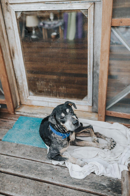Gypsy, always guarding the door to the yoga deck.