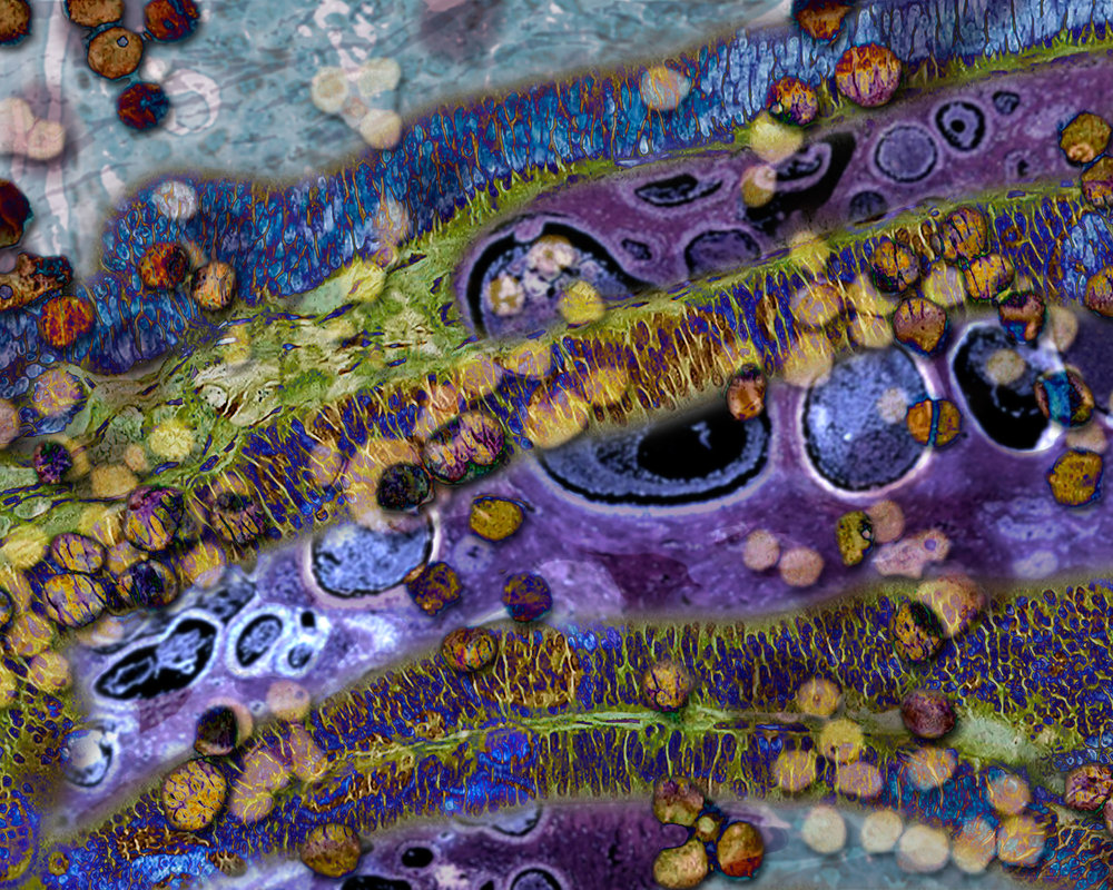 panning_org 8x12_layers.jpg