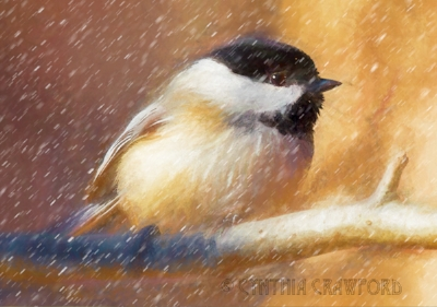chickadee.snow.jpg
