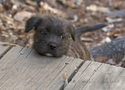 glen.pup.chin_O6A3312.jpg