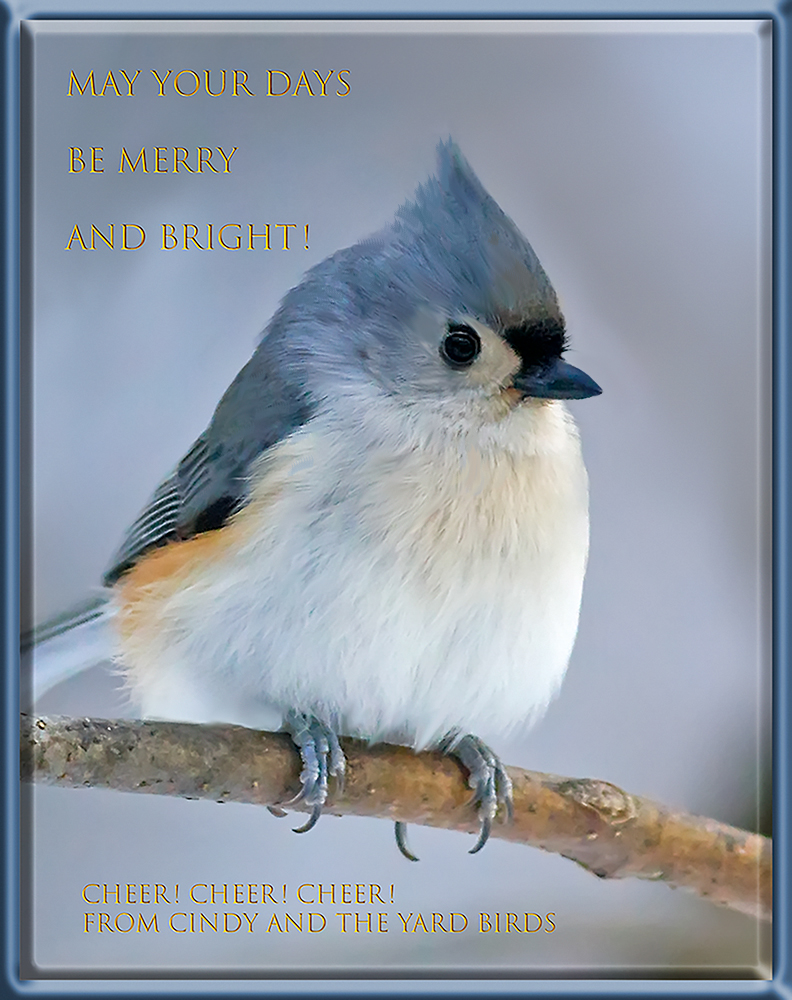 tufted.titmouse3_6136web.jpg