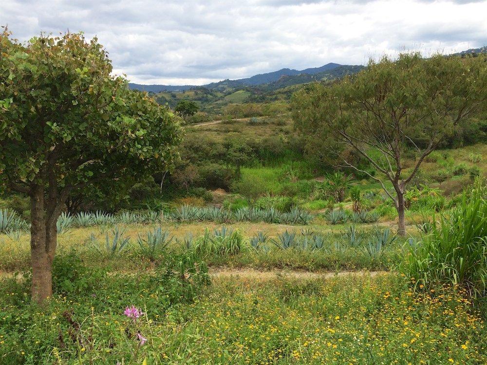 Tío Rey's land