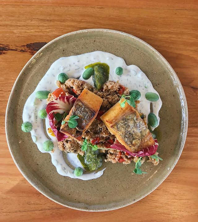 This week's market fish 🙌🏼🙌🏼 pan fried Spanish mackerel with a ratatouille style bourghal salad, tzatziki, bunya nut pesto and the cutest little cucamelons from Suncoast Fresh 🐟🐟