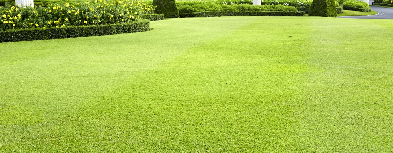 Smart Tips For Uncovering Landscaping