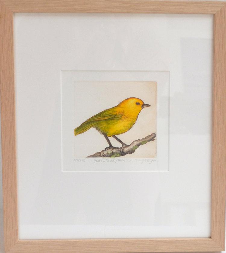Yellowhead; Mohua  Mary Taylor, framed print, 310mm x 380mm  $210.00