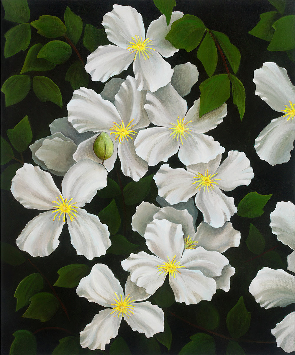 Morning Light Clematis  Nicolle Aston, framed (white) 1st edition print, #1/50, 750mm x 635mm  $850.00