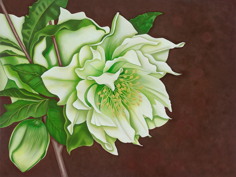Lenten Rose  Nicolle Aston, acrylic on canvas, 1220mm x 910mm  $3,900.00