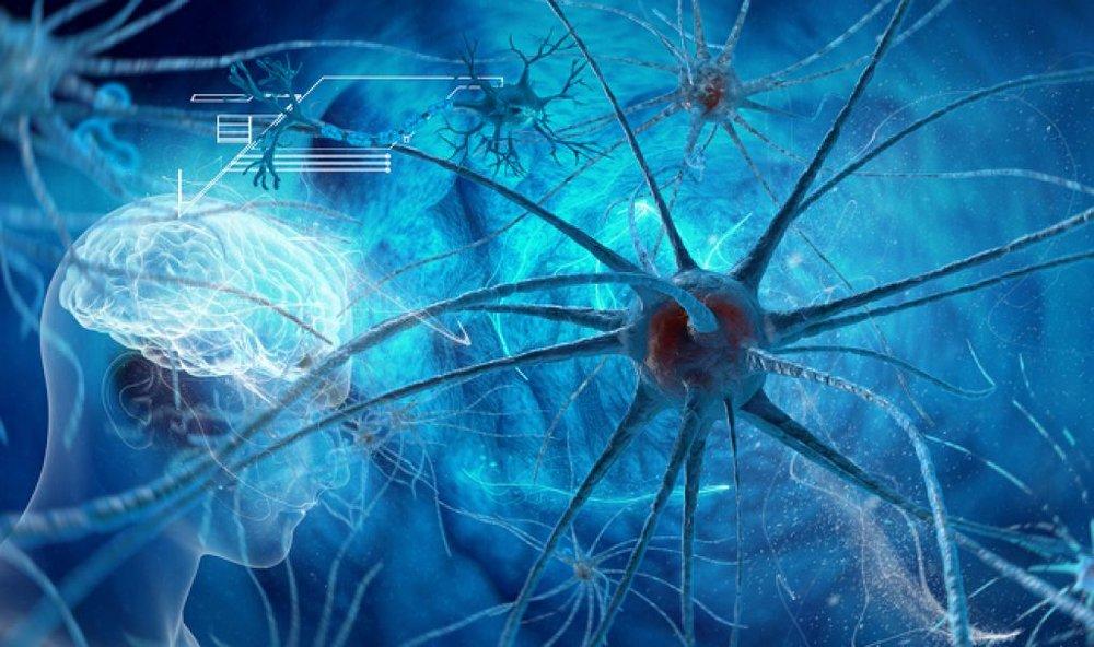 20170227-brain-neurons-shutterstock-33bw3llc7nczvaanbiobuo.jpg