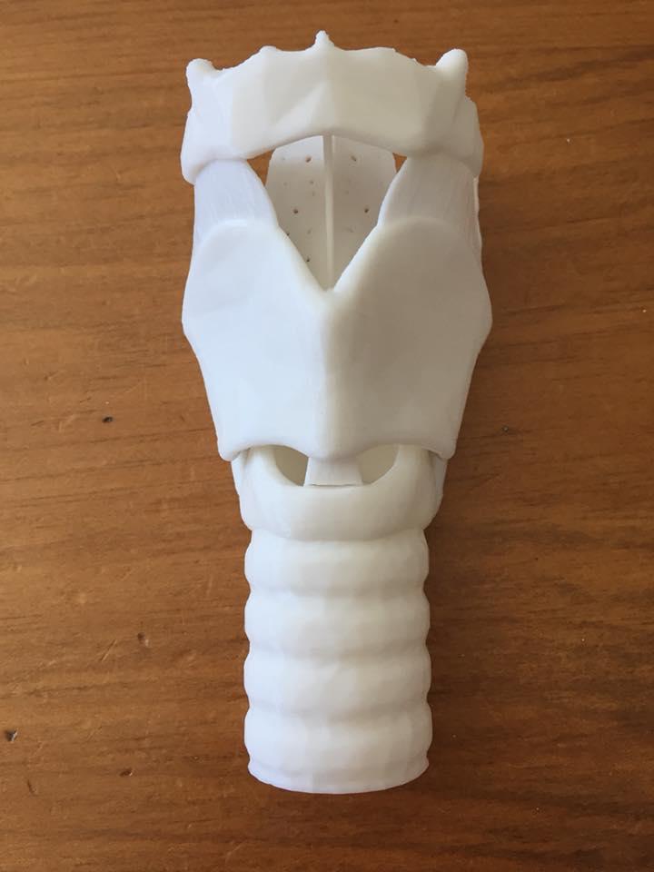 Anatomy Of The Larynx 3d Model Cindy Sadler