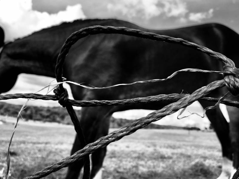 horse and rope.jpg