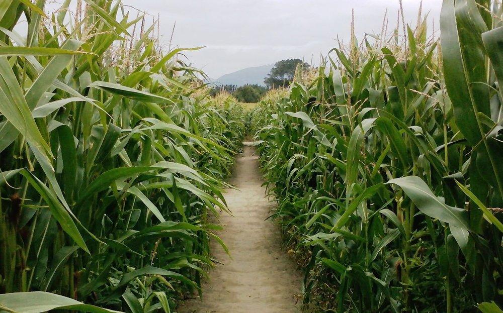maze-path-e1493868508599.jpg