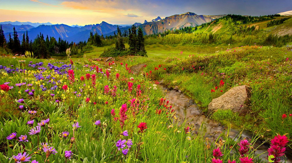 nature-landscapes_other_mountain-meadow_15770.jpg