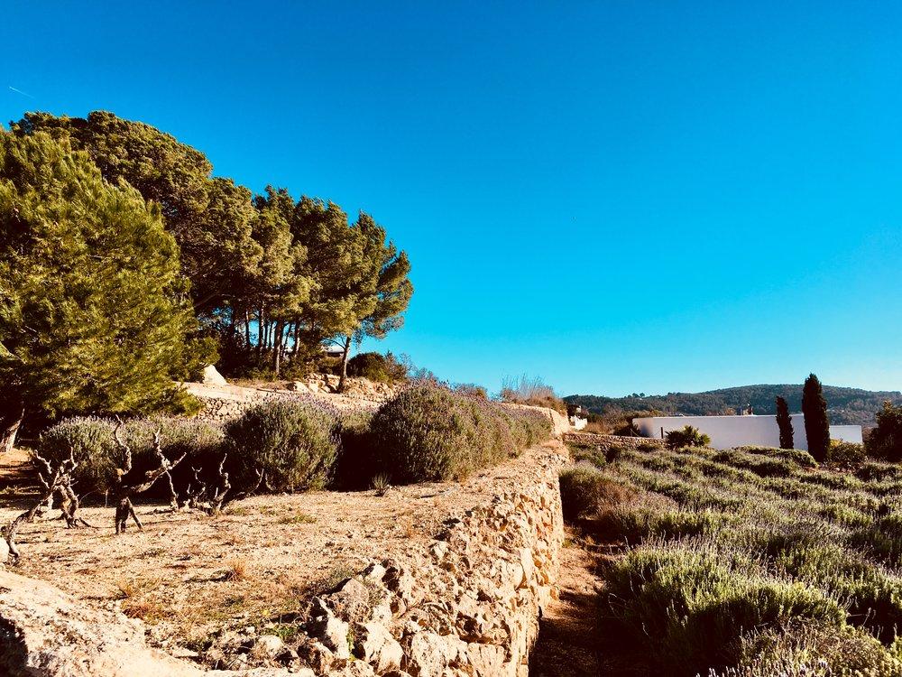 """Das Feuchtgebiet """"Es Broll"""" auf Ibiza. #wandern #ibiza #wanderurlaub #urlaub #urlaubstipps #natur #esbroll #spanien #balearen #lavendelfelder #lavendel"""