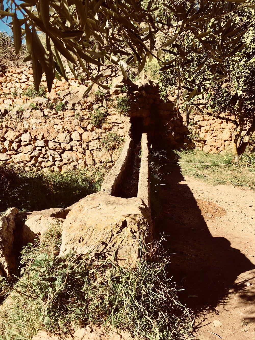 """Das Feuchtgebiet """"Es Broll"""" auf Ibiza. #wandern #ibiza #wanderurlaub #urlaub #urlaubstipps #natur #esbroll #spanien #balearen"""