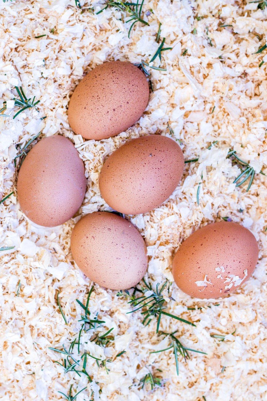 Leckeres Frühstückspfännchen mit Kichererbsen, Spiegelei und pikanter Harissa-Tomaten-Salsa. #frühstück #eier #shakshuka