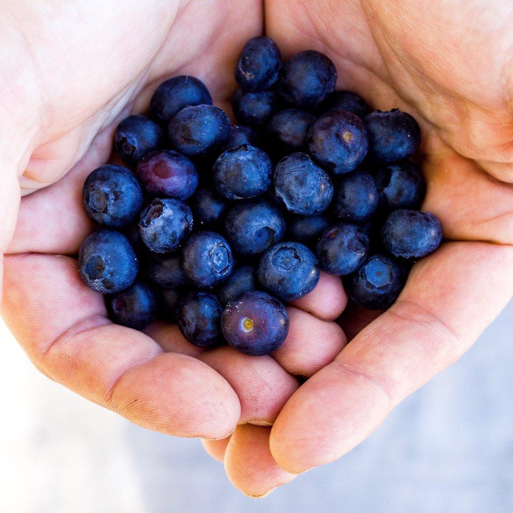 Leckerer Blaubeerkuchen aus Reisgrieß. #glutenfrei #gesund #lecker #einfach #blaubeeren