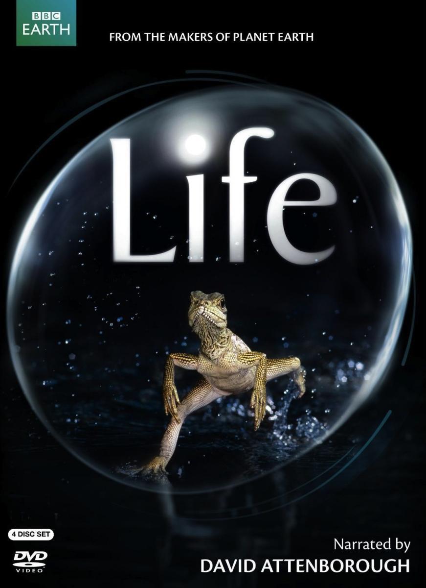life-437517169-large.jpg