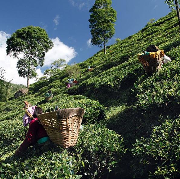 thé.PNG