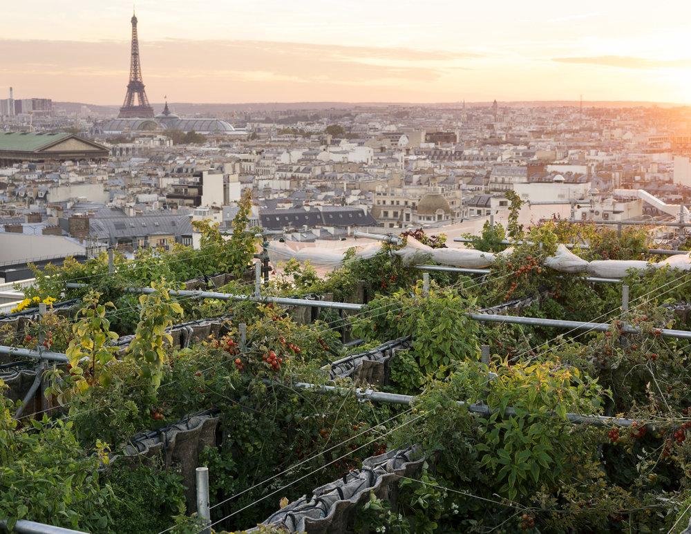 Le jardin perché des Galeries Lafayette Haussmann - Au coeur du quartier de l'Opéra, les Galeries Lafayette vous proposent de visiter l'un des jardins les plus spectaculaires de la ville.Tous les samedis de 15h à 16h, sur le toit des Galeries Lafayette: inscriptions.