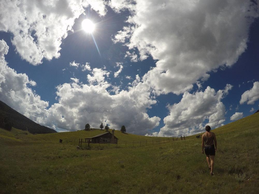 Paloma en el Valles Caldera, explorando una casa abandonada.