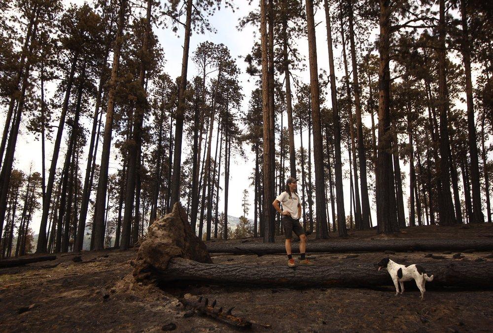 Bosque quemado, en Jemez.