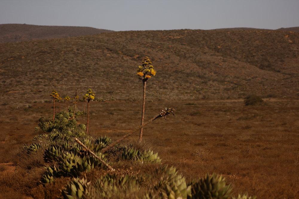 Lineas del desierto.