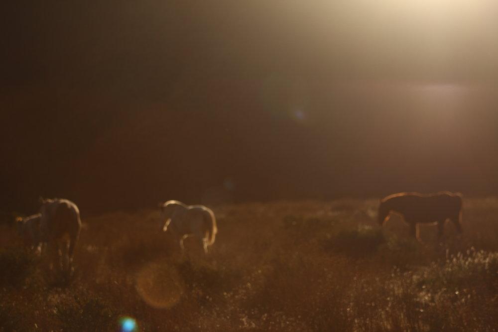En camino al Rancho El Coyote.