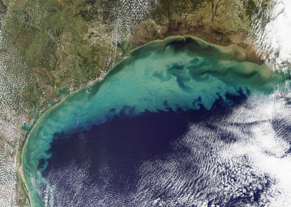 Oxygen depleted zones of the Gulf of Mexico via satellite (Image Source: Clean Technica)