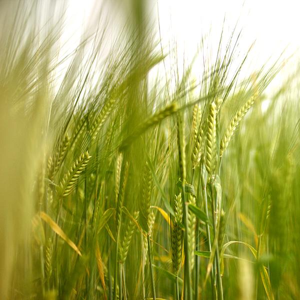 Farming - Read more