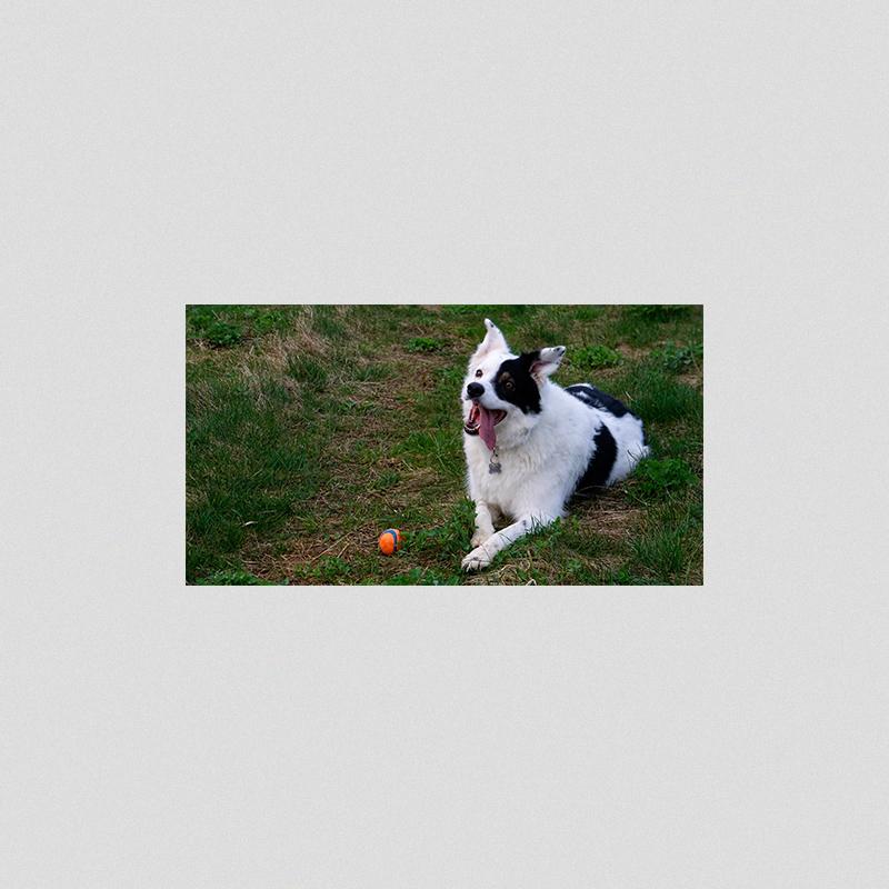 pets 1.jpg