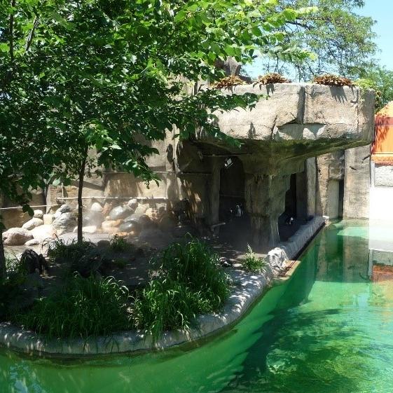 Toledo Zoo Penguin Beach -