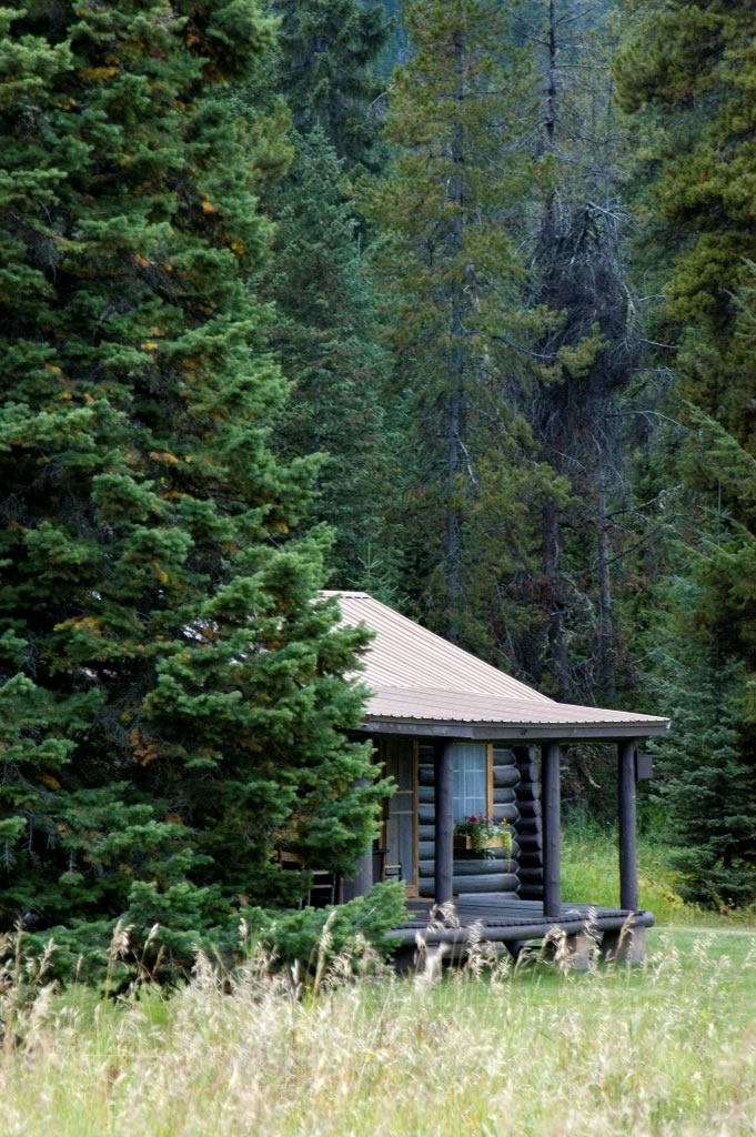 Your cabin tucked away in the lodgepole pines.