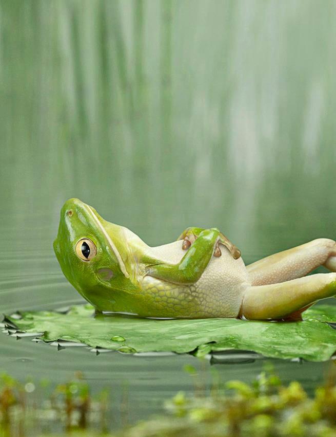 frog-at-rest.jpg