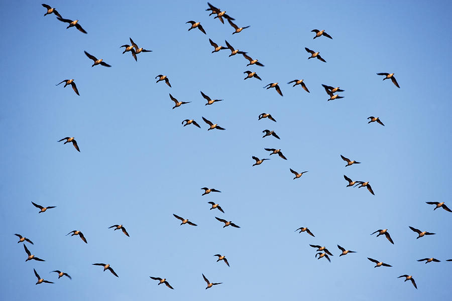 usa-new-york-new-york-city-flock-of-birds-on-blue-sky-fotog.jpg