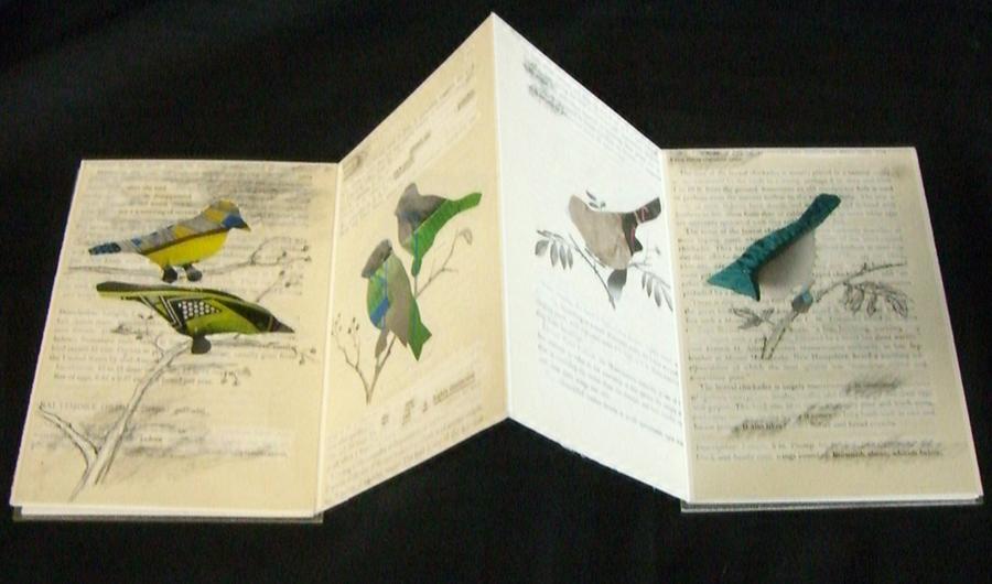 VVanAmeyden, Rare birds of America