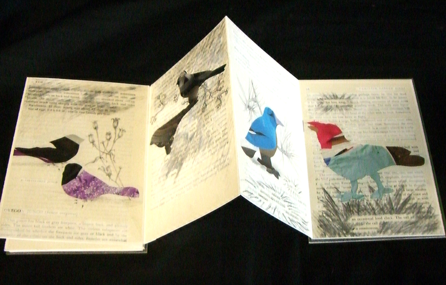 V VanAmeyden, Rare birds of America