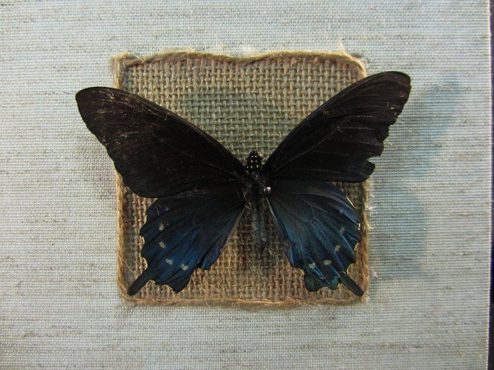 Katherine Gomon, Evolve, micron pen and graphite, 2014, Kalamazoo, MI