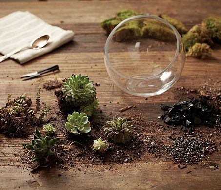 Gifts That Last: Orchids, Terrariums & More